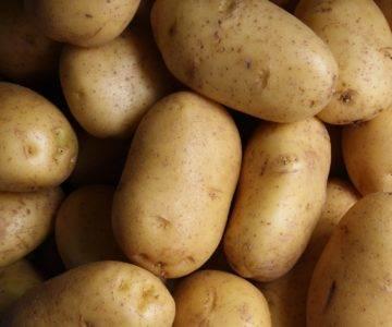 Сорт картофеля уладар: описание, посадка и уход
