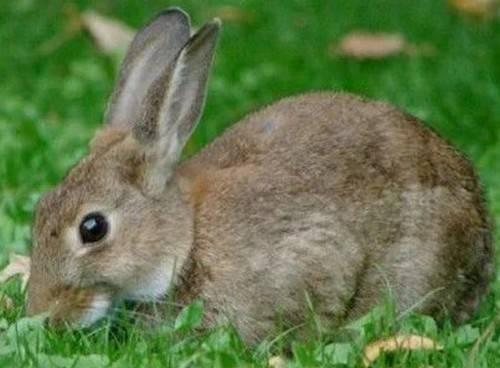 Молочай в кормах для кролей, можно или нет? - общая информация - 2020