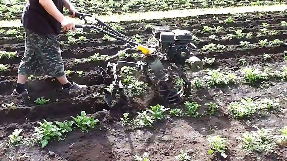 Посадка картофеля мотоблоком с окучником: советы и правила посадки