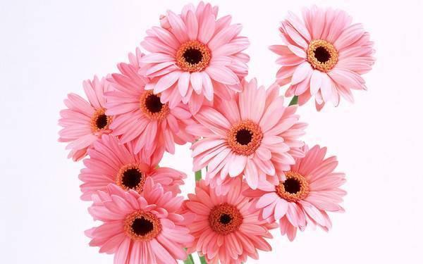 Как называются цветы, похожие на ромашки: фото и названия садовых растений для ландшафтного дизайна