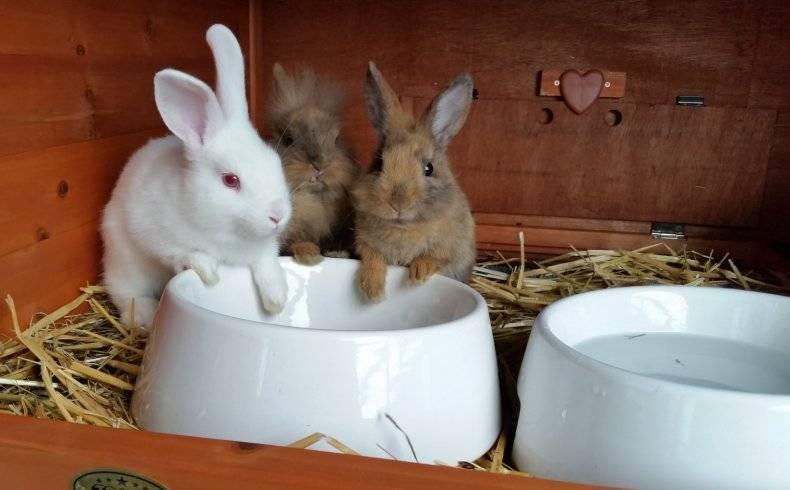 Как спасти кроликов от жары: рассматриваем основательно