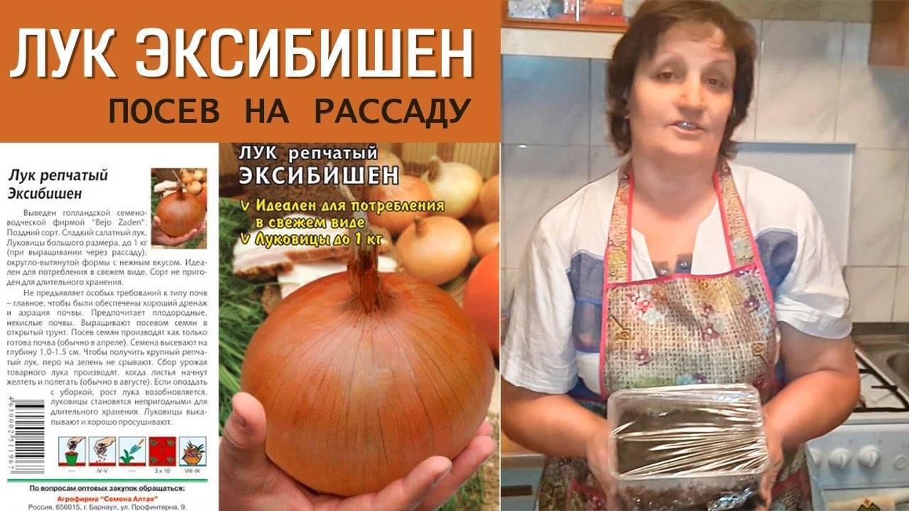 Как вырастить лук эксибишен из семян - подробная инструкция!