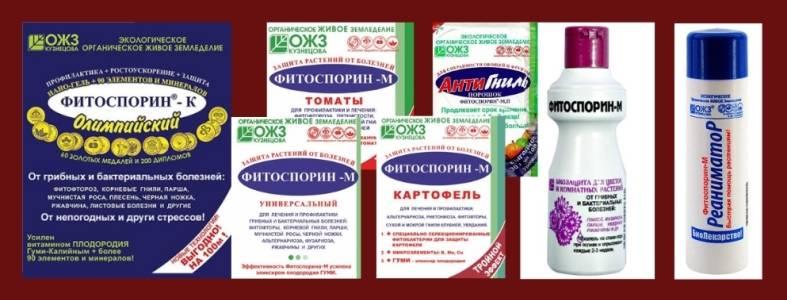 Варианты развода фитоспорина, примеры обработки комнатного растения