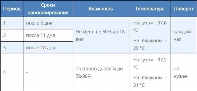 Инкубация фазаньих яиц: режим в домашних условиях и температура, срок, а также таблица