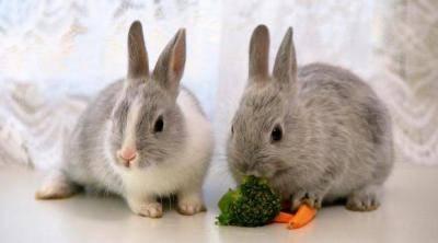 Как правильно купать декоративного кролика — основные способы