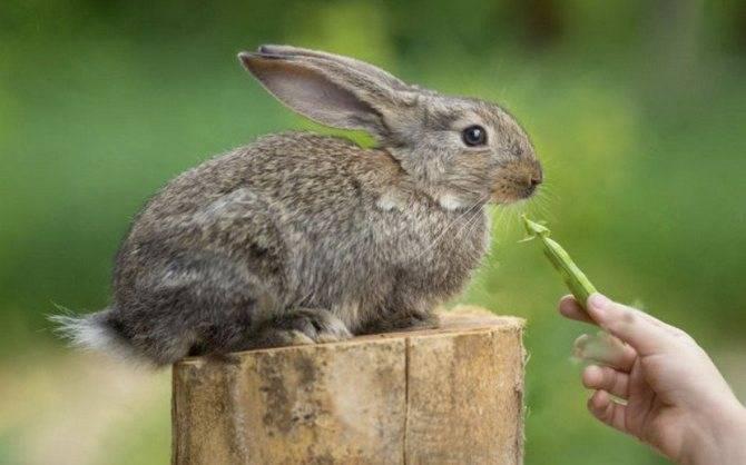 Какой хлеб полезно давать кроликам, а какой нельзя?
