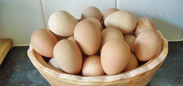О яйцах цесарок: как они выглядят и чем отличаются от куриных - сравнение