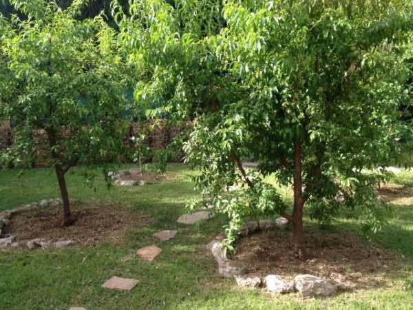 Какие растения можно посадить под яблоней?