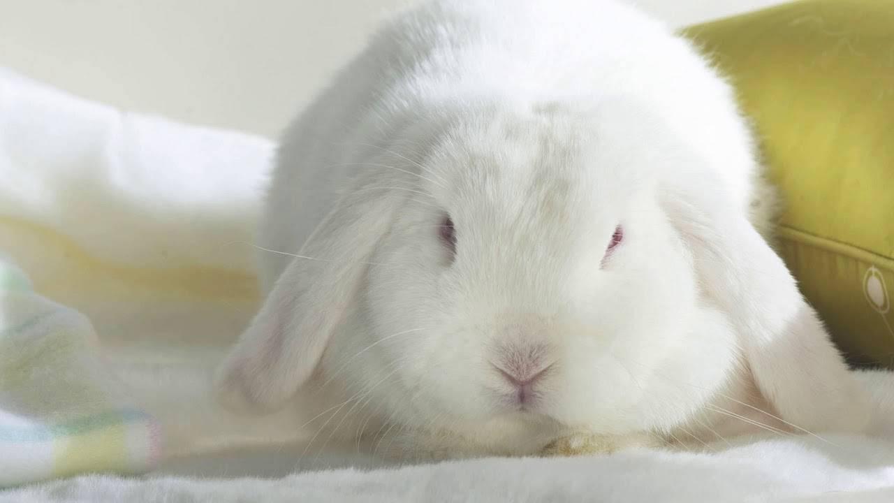 Отказ пушистых подопечных от еды и питья: что должны знать кролиководы? почему кролик не ест и не пьет? почему кролик не ест корм.