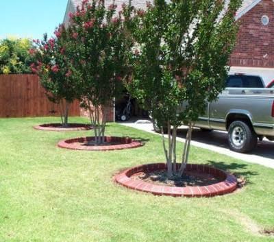 Приствольные круги плодовых деревьев оформление, бордюр вокруг дерева