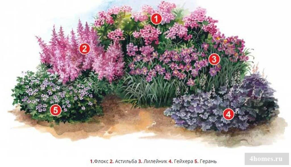 Цветок гейхера выращивание из семян посадка и уход в открытом грунте