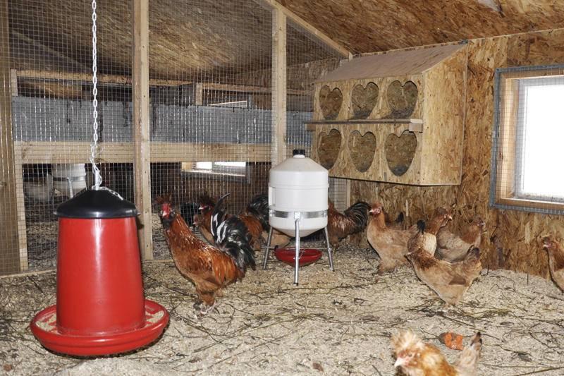 Как изготовить куриные гнезда своими руками?