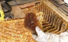Как избавиться от соседских пчел на участке?