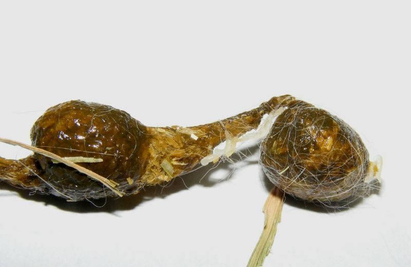 Глисты у кроликов и методы лечения народными средствами