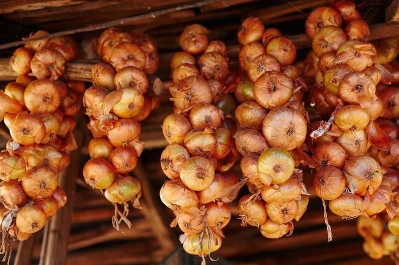 Как хранить лук-севок