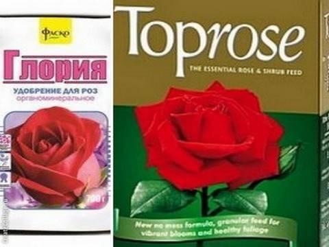 Выращивание роз: из семян и черенков, условия, уход, подкормки
