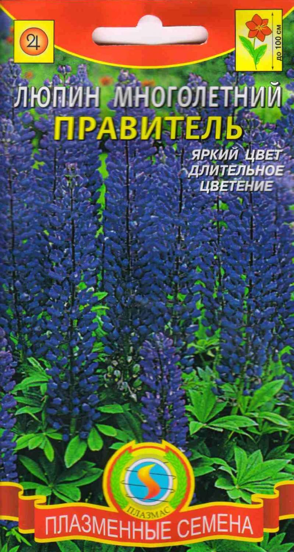Цветок люпин многолетний: описание растения и его выращивание