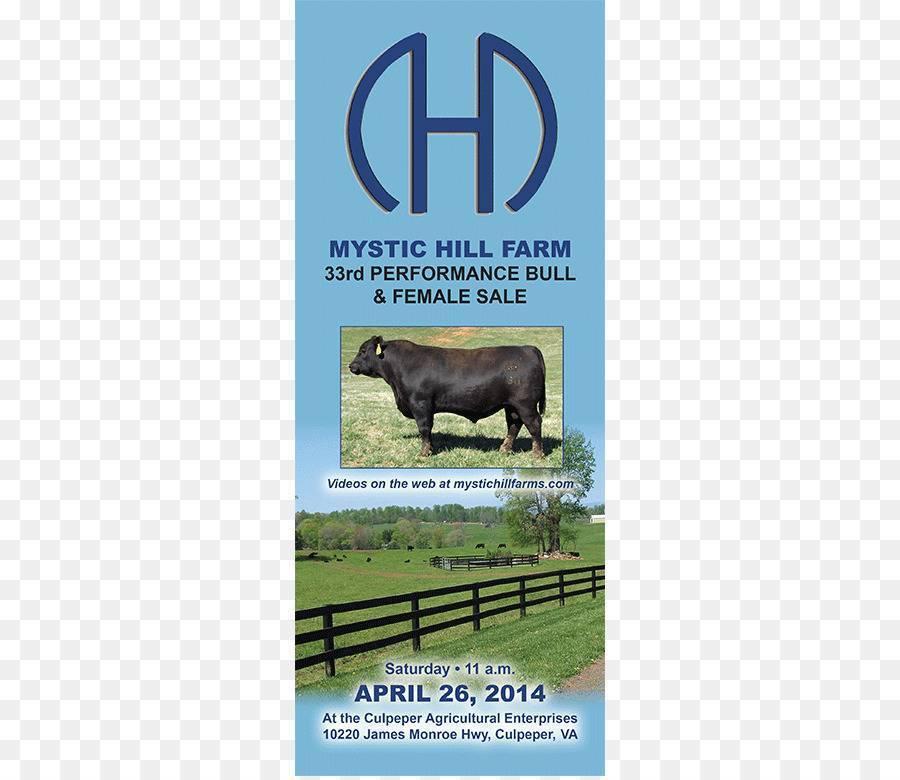 Описание и фото лучших мясных пород коров. рекомендации при выборе