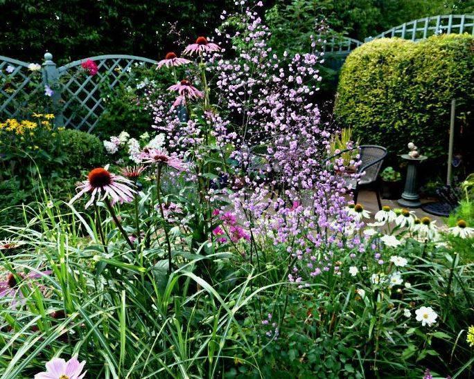 Василистник водосборолистный — особенности ухода за растением
