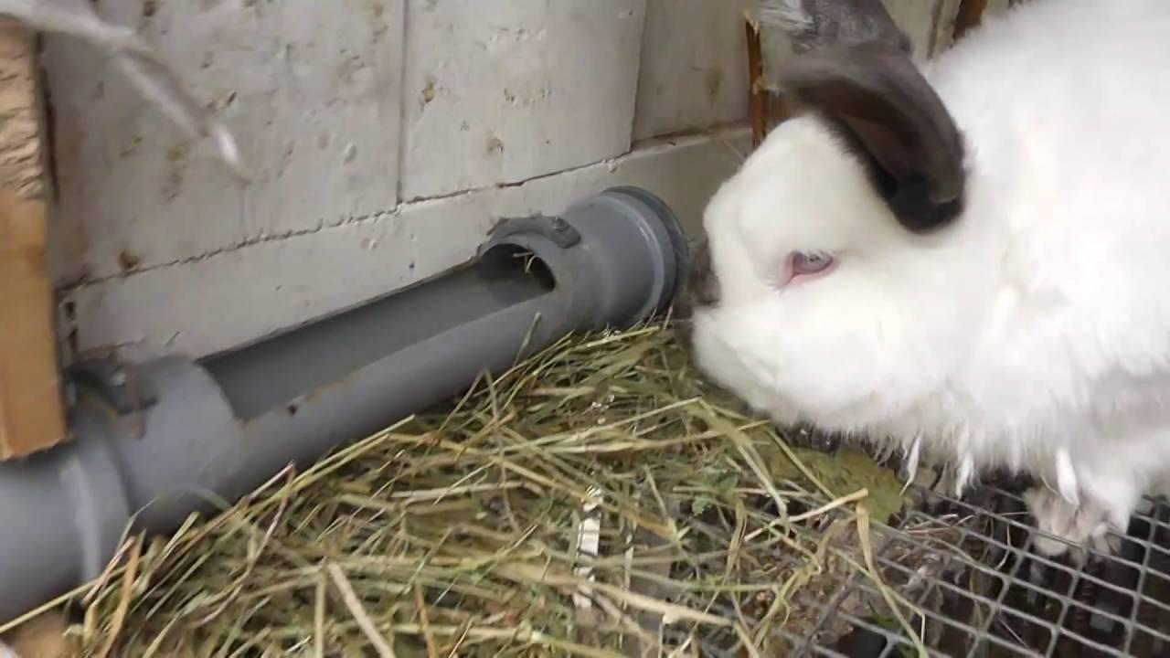 Поилки для кроликов: какие бывают и как сделать своими руками