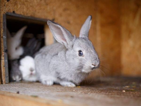 Дезинфекция клеток кроликов после болезни и в процессе жизнедеятельности 2020