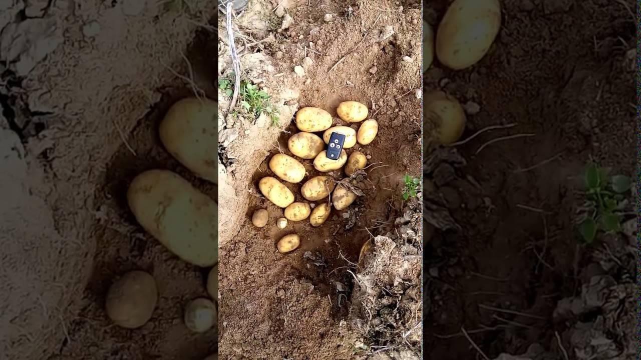 Картофель люкс