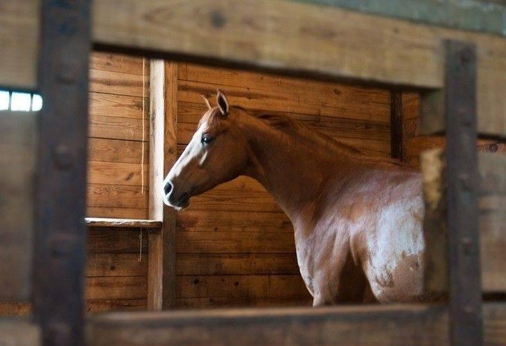 В каком возрасте обучают лошадей