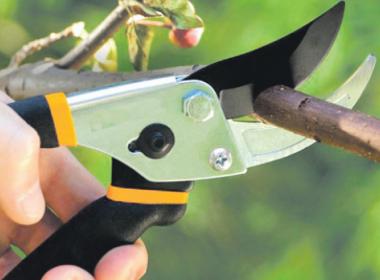 Что делать при появлении трещин на коре груши – пошаговая инструкция по лечению