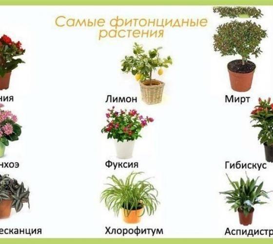 Растения для детской комнаты: выбор, количество и свойства