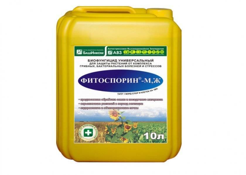 Фитоспорин – безопасная биологическая защита томатов от болезней