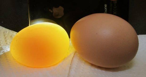 Частые проблемы несушек — яйца без скорлупы