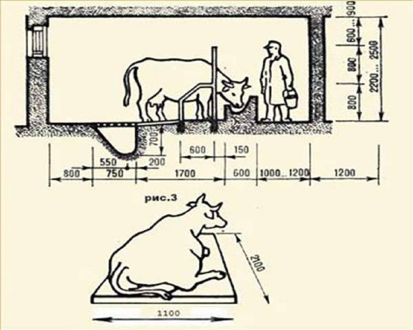 Стойло для быков: виды, изготовление своими руками