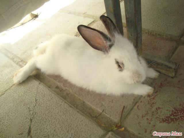 Кролики. язык тела - ростки жизни