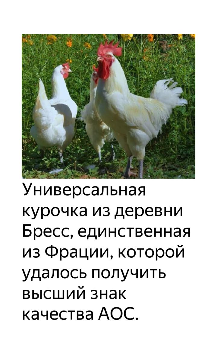 Бресс гальская порода кур: описание и фото, характеристики и особенности выращивания