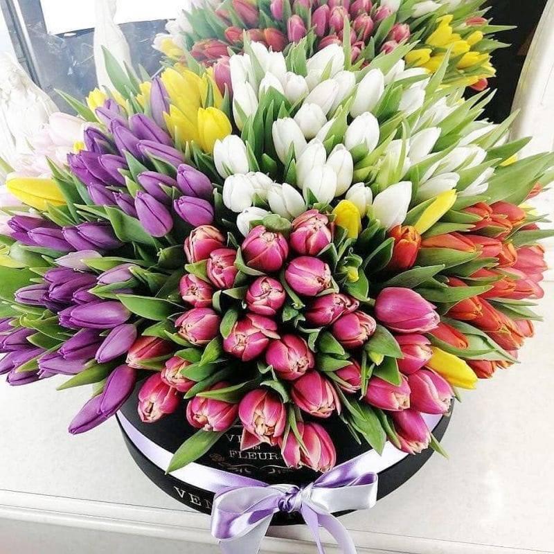 Тюльпаны: когда выкапывать после цветения, что дальше с ними делать?