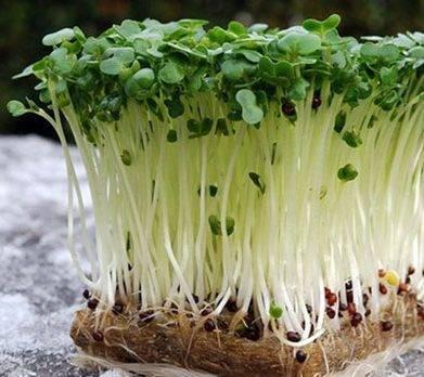 Кресс-салат – правила посадки и ухода, особенности выращивания на подоконнике в земле и без нее