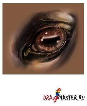 Глаза лошади: особенности зрения, анатомия глаза, болезни