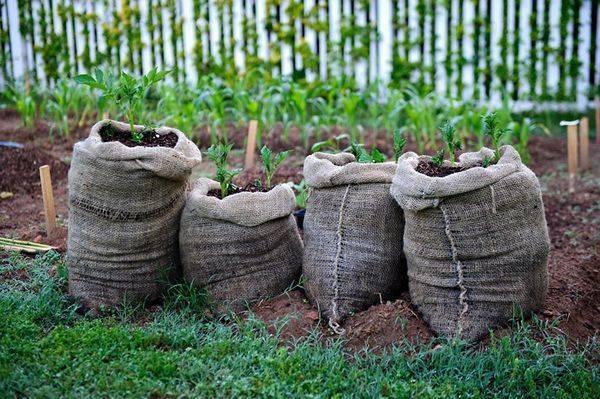 Выращивание картофеля как бизнес: рентабельность и важные секреты получения богатого урожая