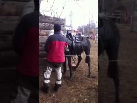 Как обучить лошадь ходить боком: 10 шагов