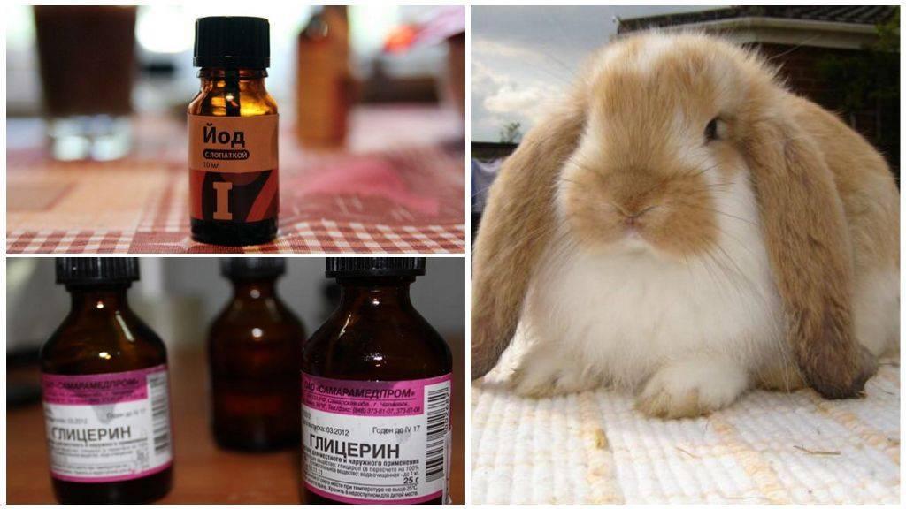 Ушной клещ у кроликов - признаки, лечение, препараты