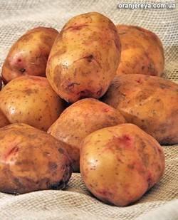 Картофель киевский свитанок. свитанок киевский: характеристика сорта картофеля