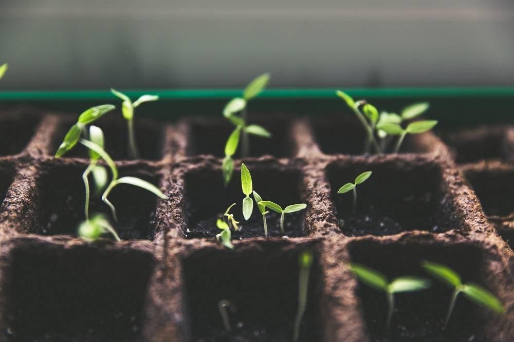 Инструкция по выращиванию рассады огурцов