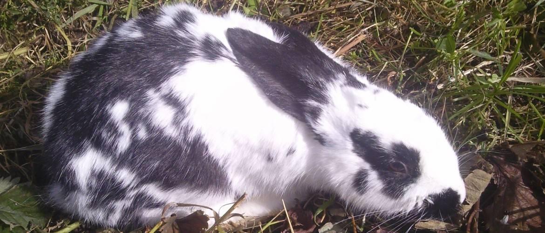 Вздутие живота у кроликов или как сохранить жизнь своему питомцу 2020