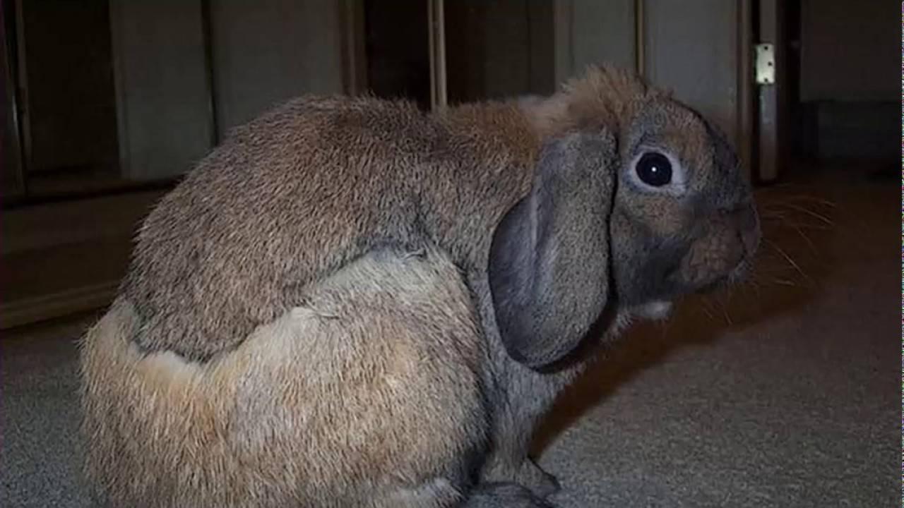Глисты у кроликов: причина появления, симптомы, лечение и профилактика