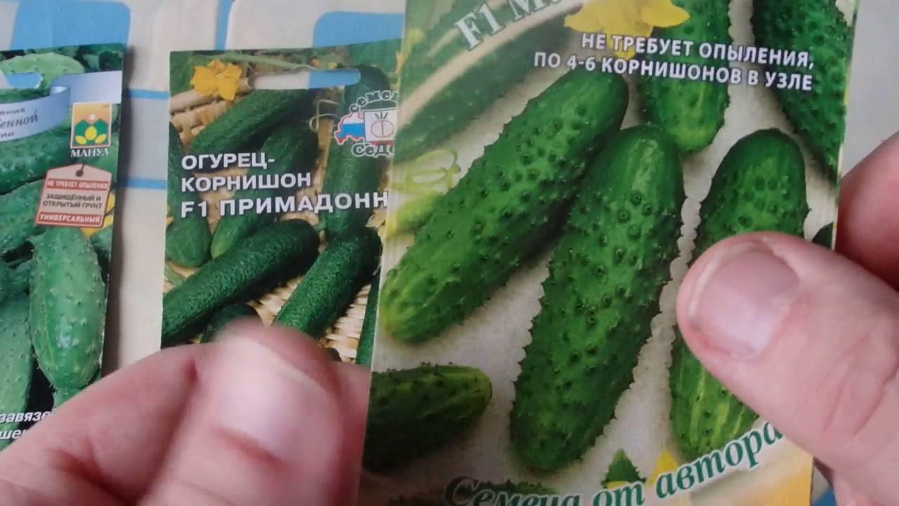 Лучшие сорта самоопыляемых огурцов и особенности выращивания
