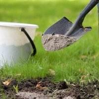Проверенные средства для удобрения сливы