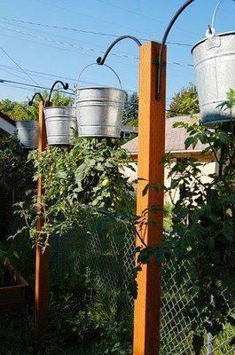 Выращиваем помидоры вверх ногами   образцовая усадьба