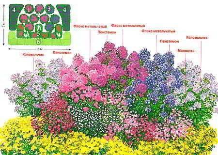 Клумбы с пионами и другими цветами фото