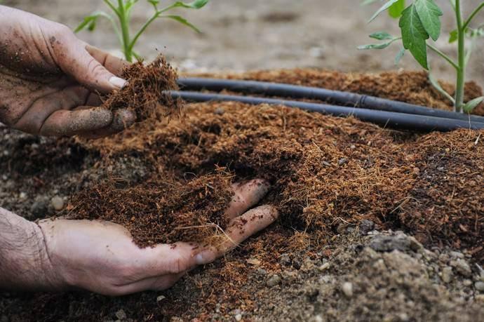 Чем подкормить помидоры: повышаем урожайность с помощью удобрений