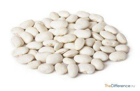 Разница между бобами и фасолью. боб - это название плода растений семейства бобовых и отдельных растений